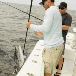 kingfish gaff